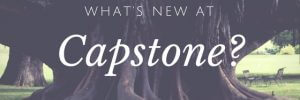 capstone new services